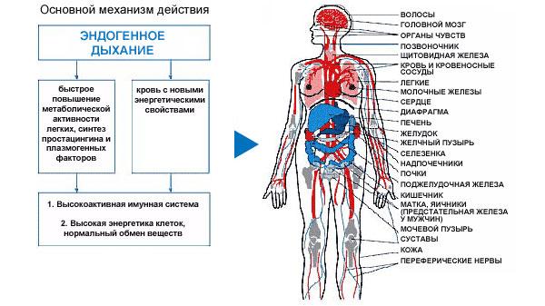 Дыхательный тренажер Фролова - Магазин :: Медтехника-сервис, Запорожье. Медицинские товары для дома и медучреждений. Купить: тон