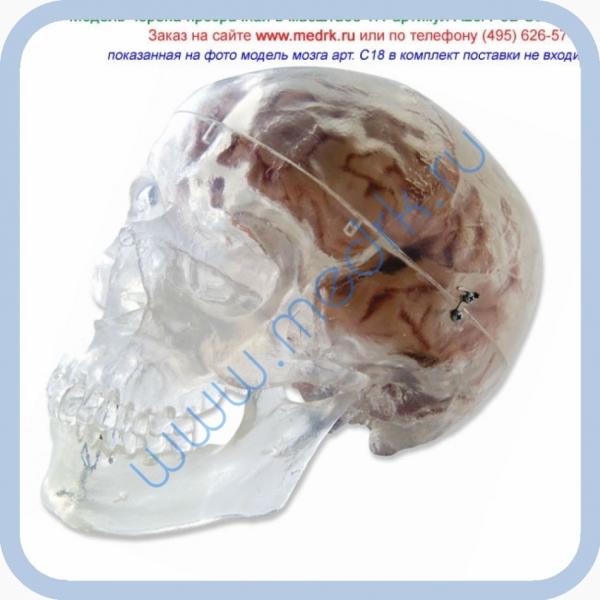 Череп человека прозрачный A20/T  Вид 1