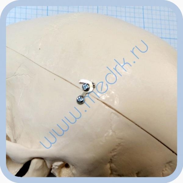 Макет черепа A20  Вид 8