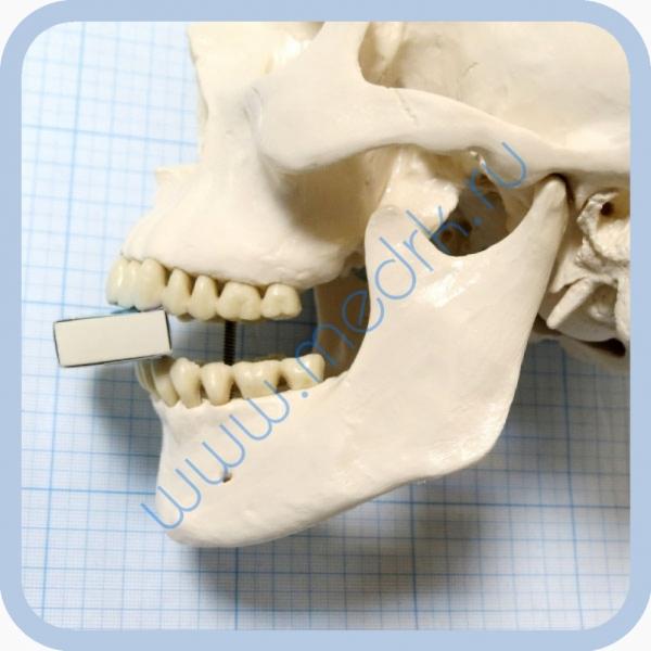 Макет черепа A20  Вид 9
