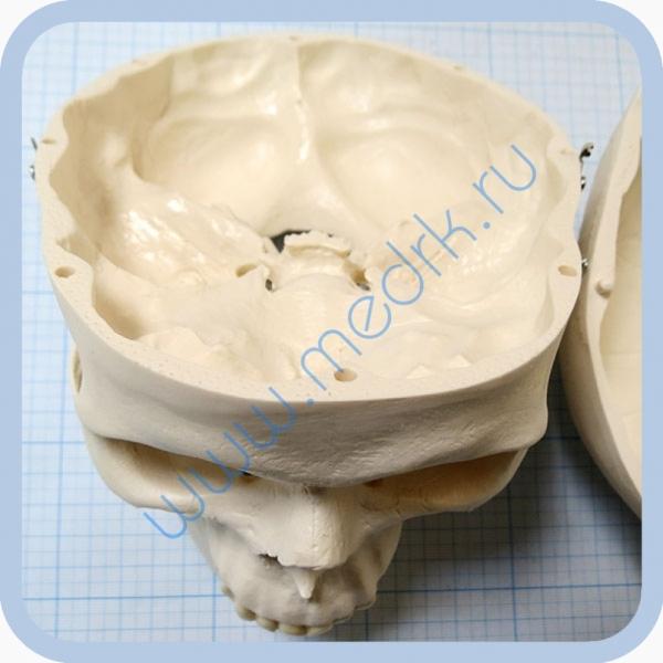 Макет черепа A20  Вид 11