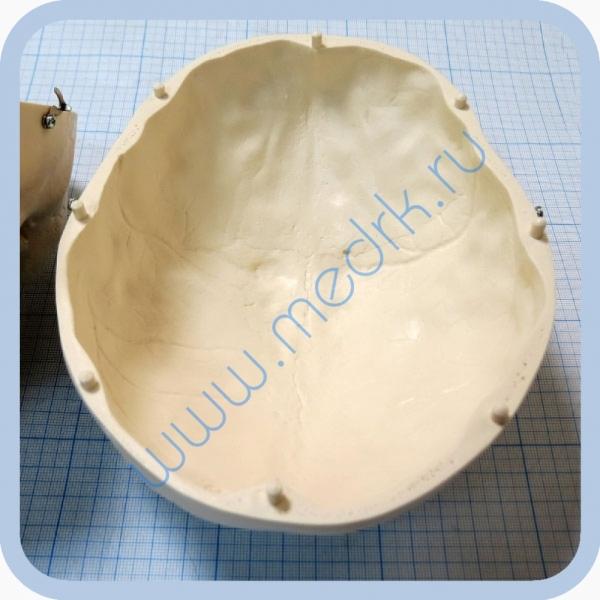 Макет черепа A20  Вид 12