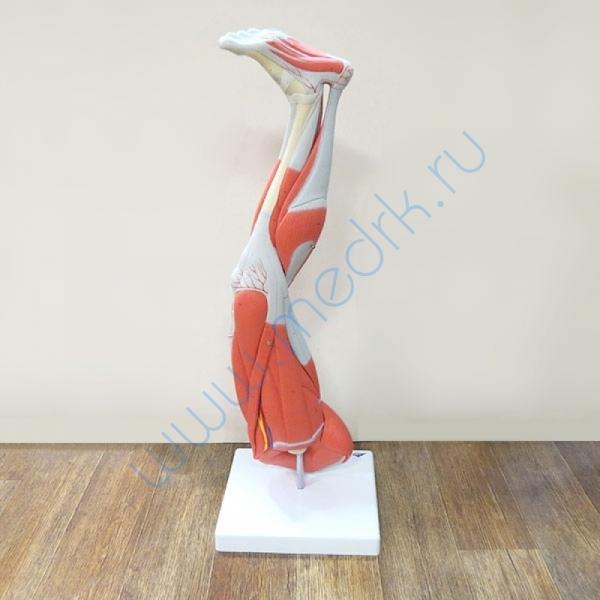 Модель ноги M20  Вид 1