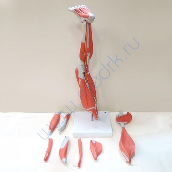 Модель ноги M20  Вид 6