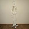 Модель скелета человека A10