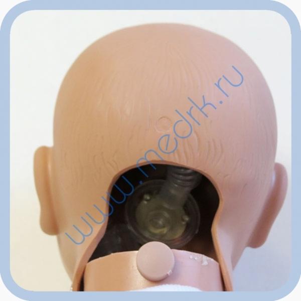Манекен новорожденного W44541 для обучения реанимации  Вид 1