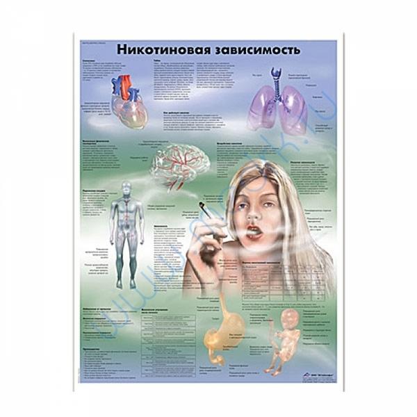 Плакат Никотиновая зависимость ламинированный 3B Scientific  Вид 1