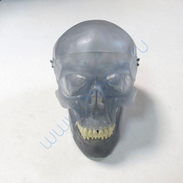 Модель черепа светящаяся A20/N «Неон» 3B Scientific  Вид 1