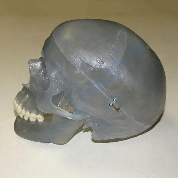 Модель черепа светящаяся A20/N «Неон» 3B Scientific  Вид 3