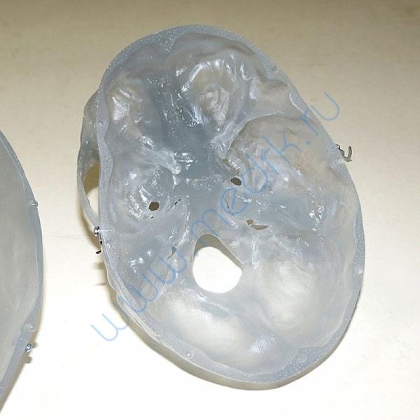 Модель черепа светящаяся A20/N «Неон» 3B Scientific  Вид 6