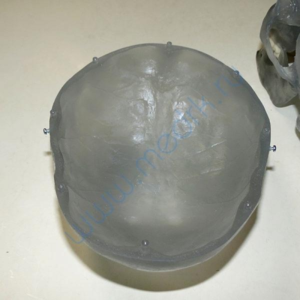 Модель черепа светящаяся A20/N «Неон» 3B Scientific  Вид 7
