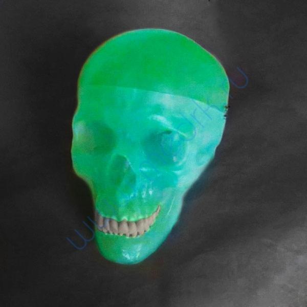 Модель черепа светящаяся A20/N «Неон» 3B Scientific  Вид 9