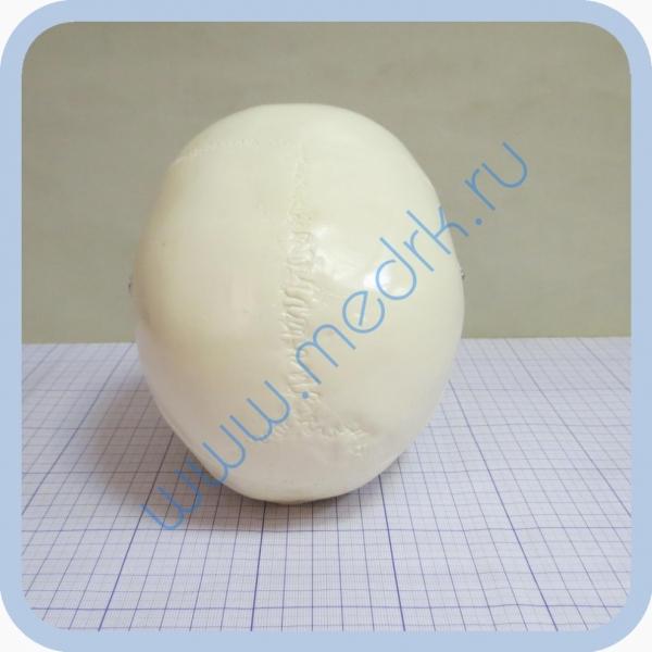 Фантом черепа учебный (модель, макет)  Вид 5